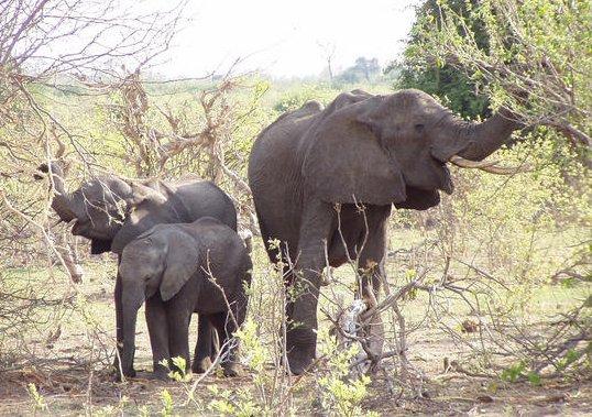 Foto sloni